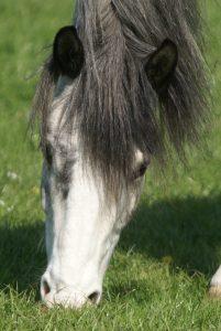 Yakari - unser Kinderlieblingspferd